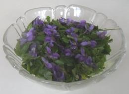 groen-salat-med-viol