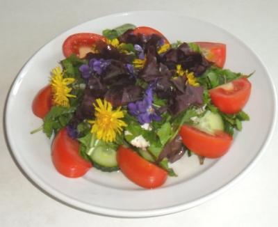salat-m-skvalderkål